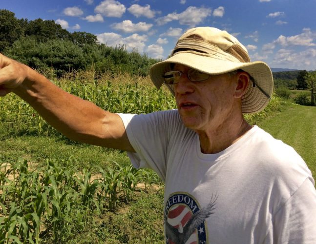 Lee Draper, of Purple Rooster Organics,  surveys a 1-acre plot of land where he and his wife Jaz harvested peanuts, sweet potatoes and corn. Draper planted three varieties of cover crops last winter on this land, and is looking to continue using cover crops this year. Kevin Green/Daily